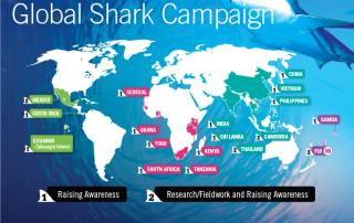 Projects Abroad Global Shark Campaign